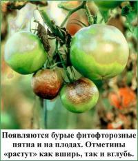 http://gryadkaojz.ru/uploads/23.jpg