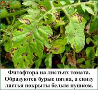 http://gryadkaojz.ru/uploads/41.jpg