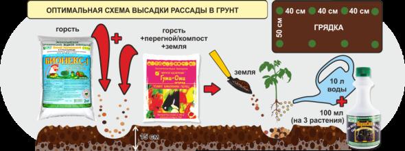 Выращивание томатов. Высадка в грунт