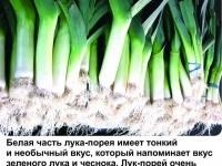 ЛУК-ПОРЕЙ