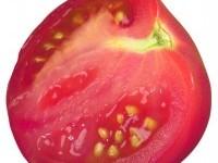 Можно ли увеличить урожайность сорта, если постоянно собирать семена с самых урожайных кустов томатов?