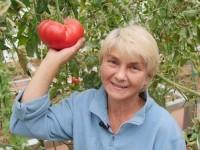 ОЖЗ-технология выращивания томатов от Елены Храмушиной