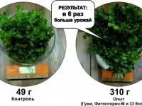 Богатырские салатные рекорды от «БашИнком»