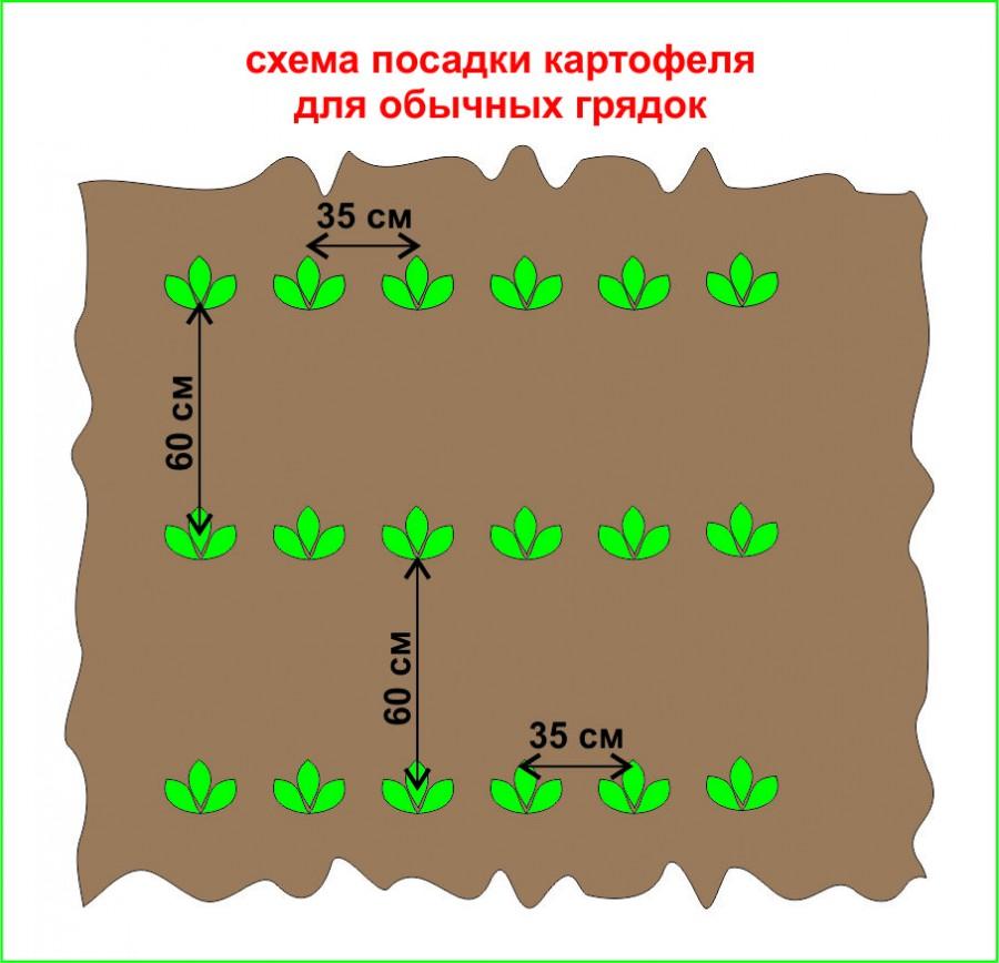 Чуфа земляной миндаль: выращивание и фото растения Сайт о саде, даче