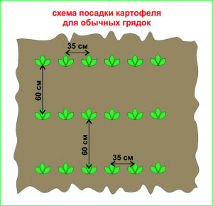 http://gryadkaojz.ru/uploads/bezymjannyj-14.jpg